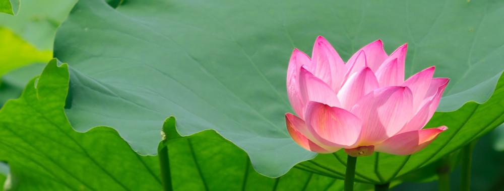 Mindfulness with Nina La Rosa